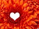 Coeur dans une fleur