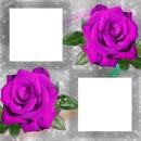 Julita02 Rosas