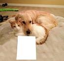 perro con gato abrazados pa texto o colocar una imagen