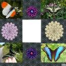 fleurs-papillons