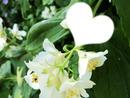 Fleurs de printemps)*