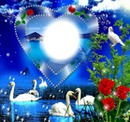 Coeur avec des cygnes