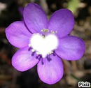 mon coeur de fleur