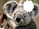 cadre koala