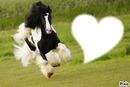 chevaux au beau galop