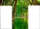erdő patakkal