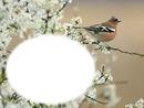 Oiseau - nature