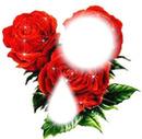 flores vermelhas