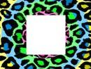 leopard crazy