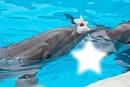 etoile de dauphin