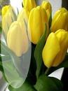 Yellow flowers! (Flori galbene)