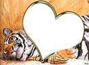 coeur tigre