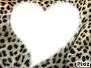 le coeur o l eopard