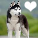 chien d'amour