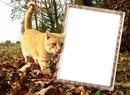 Podzim,kočka