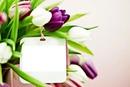 çiçekler diyarı