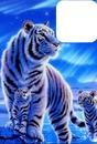 Maman tigre Blanc
