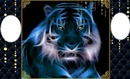 blue tiger bb