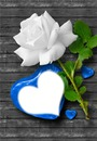1 white rose