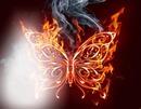 borboleta de fogo