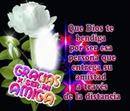 Rosa blanca Gracias por tu amistad