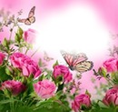 Butterfly Cloud