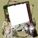 1 photo avec 4 chatons