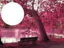 L'univers de l'automne