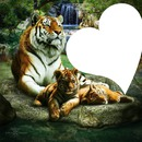 les tigres a la cascade
