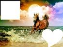 cheval dans l eau
