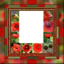 coquelicots laly2