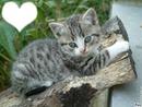 Petit chatons cro choux !!