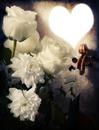 coeur et rose blanche