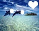 les dauphin au paradi