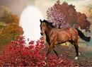 Cc Horse II