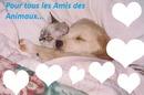 AMIS DES ANIMAUX