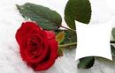 1 cadre fleur