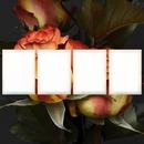 Dj CS Love Flower 4 Frames