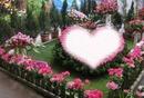 kalp gül