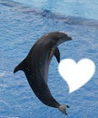 au toi jolie dauphin