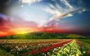 цветно лято