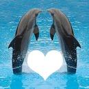 paule et les dauphins