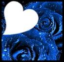 Cétina bleu