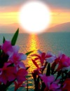 Pôr do sol e flores