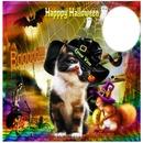 kitty & halloween