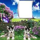 franco cani