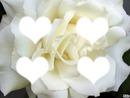 la fleur de l amour