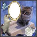 cadre avec chat 1 photo