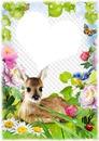 1 photo bambi