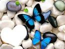 amitié papillon bleu